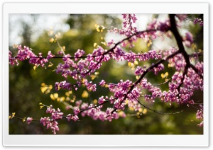 Blossoms Ultra HD Wallpaper for 4K UHD Widescreen desktop, tablet & smartphone