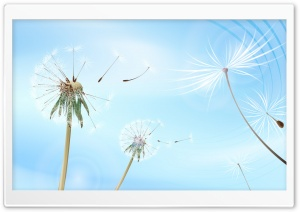 Blowing Dandelions HD Wide Wallpaper for Widescreen