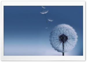 Blue Ultra HD Wallpaper for 4K UHD Widescreen desktop, tablet & smartphone