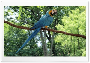Blue and Gold Macaw Parrot HD Wide Wallpaper for Widescreen