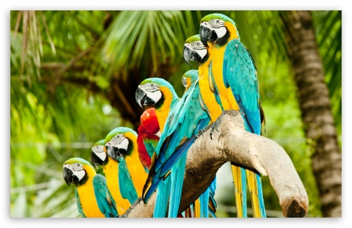 Blue And Gold Macaw Parrots ❤ 4K UHD Wallpaper for Wide 16:10 5:3 Widescreen WHXGA WQXGA WUXGA WXGA WGA ; 4K UHD 16:9 Ultra High Definition 2160p 1440p 1080p 900p 720p ; Standard 4:3 5:4 3:2 Fullscreen UXGA XGA SVGA QSXGA SXGA DVGA HVGA HQVGA ( Apple PowerBook G4 iPhone 4 3G 3GS iPod Touch ) ; Tablet 1:1 ; iPad 1/2/Mini ; Mobile 4:3 5:3 3:2 16:9 5:4 - UXGA XGA SVGA WGA DVGA HVGA HQVGA ( Apple PowerBook G4 iPhone 4 3G 3GS iPod Touch ) 2160p 1440p 1080p 900p 720p QSXGA SXGA ;