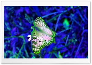 Blue And Green Butterfly HD Wide Wallpaper for Widescreen