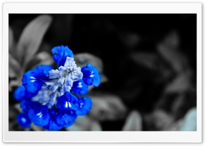 Blue Bells in the Dark HD Wide Wallpaper for Widescreen
