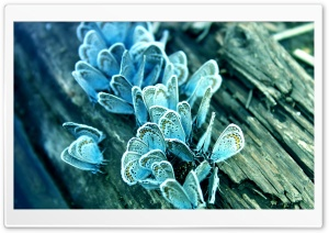 Blue Butterflies HD Wide Wallpaper for Widescreen