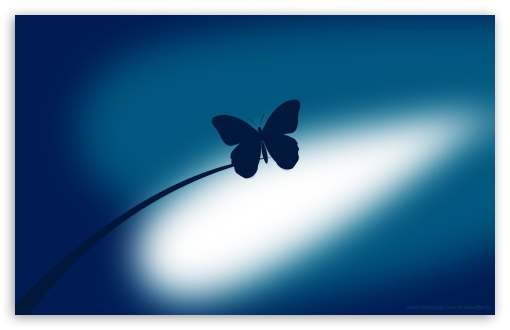 Blue Butterfly ❤ 4K UHD Wallpaper for Wide 16:10 5:3 Widescreen WHXGA WQXGA WUXGA WXGA WGA ; 4K UHD 16:9 Ultra High Definition 2160p 1440p 1080p 900p 720p ; Standard 4:3 Fullscreen UXGA XGA SVGA ; iPad 1/2/Mini ; Mobile 4:3 5:3 16:9 - UXGA XGA SVGA WGA 2160p 1440p 1080p 900p 720p ;
