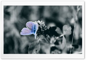 Blue Butterfly Close Up HD Wide Wallpaper for Widescreen