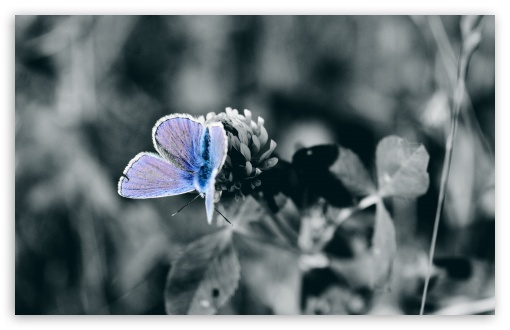 Blue Butterfly Close Up HD wallpaper for Wide 16:10 5:3 Widescreen WHXGA WQXGA WUXGA WXGA WGA ; HD 16:9 High Definition WQHD QWXGA 1080p 900p 720p QHD nHD ; UHD 16:9 WQHD QWXGA 1080p 900p 720p QHD nHD ; Standard 4:3 5:4 3:2 Fullscreen UXGA XGA SVGA QSXGA SXGA DVGA HVGA HQVGA devices ( Apple PowerBook G4 iPhone 4 3G 3GS iPod Touch ) ; Tablet 1:1 ; iPad 1/2/Mini ; Mobile 4:3 5:3 3:2 16:9 5:4 - UXGA XGA SVGA WGA DVGA HVGA HQVGA devices ( Apple PowerBook G4 iPhone 4 3G 3GS iPod Touch ) WQHD QWXGA 1080p 900p 720p QHD nHD QSXGA SXGA ; Dual 16:10 5:3 16:9 4:3 5:4 WHXGA WQXGA WUXGA WXGA WGA WQHD QWXGA 1080p 900p 720p QHD nHD UXGA XGA SVGA QSXGA SXGA ;