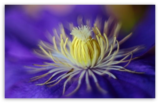 Blue Clematis Flower Macro ❤ 4K UHD Wallpaper for Wide 16:10 5:3 Widescreen WHXGA WQXGA WUXGA WXGA WGA ; 4K UHD 16:9 Ultra High Definition 2160p 1440p 1080p 900p 720p ; UHD 16:9 2160p 1440p 1080p 900p 720p ; Standard 4:3 5:4 3:2 Fullscreen UXGA XGA SVGA QSXGA SXGA DVGA HVGA HQVGA ( Apple PowerBook G4 iPhone 4 3G 3GS iPod Touch ) ; Smartphone 5:3 WGA ; Tablet 1:1 ; iPad 1/2/Mini ; Mobile 4:3 5:3 3:2 16:9 5:4 - UXGA XGA SVGA WGA DVGA HVGA HQVGA ( Apple PowerBook G4 iPhone 4 3G 3GS iPod Touch ) 2160p 1440p 1080p 900p 720p QSXGA SXGA ;