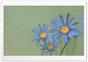 Blue Daisies HD Wide Wallpaper for Widescreen