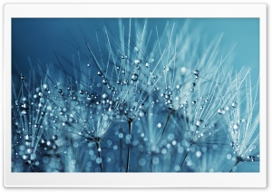 Blue Dandelion Seeds HD Wide Wallpaper for Widescreen