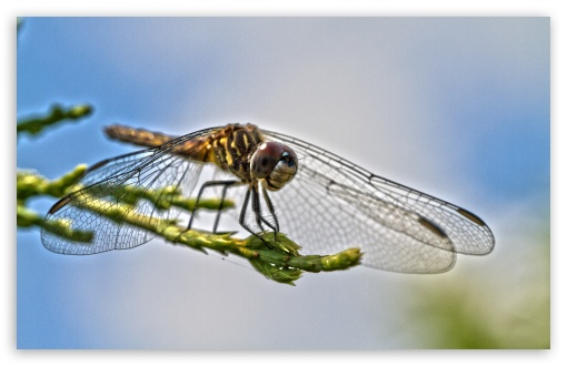 Blue Dasher ❤ 4K UHD Wallpaper for Wide 16:10 5:3 Widescreen WHXGA WQXGA WUXGA WXGA WGA ; 4K UHD 16:9 Ultra High Definition 2160p 1440p 1080p 900p 720p ; UHD 16:9 2160p 1440p 1080p 900p 720p ; Standard 4:3 5:4 3:2 Fullscreen UXGA XGA SVGA QSXGA SXGA DVGA HVGA HQVGA ( Apple PowerBook G4 iPhone 4 3G 3GS iPod Touch ) ; iPad 1/2/Mini ; Mobile 4:3 5:3 3:2 16:9 5:4 - UXGA XGA SVGA WGA DVGA HVGA HQVGA ( Apple PowerBook G4 iPhone 4 3G 3GS iPod Touch ) 2160p 1440p 1080p 900p 720p QSXGA SXGA ; Dual 16:10 5:4 WHXGA WQXGA WUXGA WXGA QSXGA SXGA ;