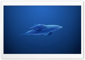 Blue Dolphins HD Wide Wallpaper for Widescreen