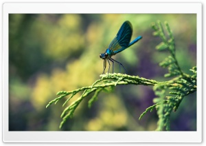 Blue Dragonfly Macro HD Wide Wallpaper for Widescreen