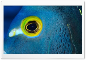 Blue Fish with Yellow Eyes HD Wide Wallpaper for Widescreen