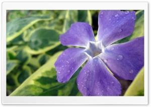 Blue Flower - Atuka's Art Ultra HD Wallpaper for 4K UHD Widescreen desktop, tablet & smartphone