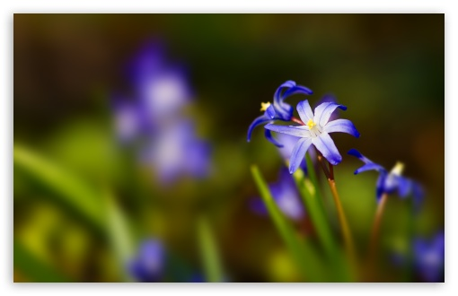 Blue Flower Bokeh ❤ 4K UHD Wallpaper for Wide 16:10 5:3 Widescreen WHXGA WQXGA WUXGA WXGA WGA ; 4K UHD 16:9 Ultra High Definition 2160p 1440p 1080p 900p 720p ; UHD 16:9 2160p 1440p 1080p 900p 720p ; Standard 4:3 5:4 3:2 Fullscreen UXGA XGA SVGA QSXGA SXGA DVGA HVGA HQVGA ( Apple PowerBook G4 iPhone 4 3G 3GS iPod Touch ) ; Tablet 1:1 ; iPad 1/2/Mini ; Mobile 4:3 5:3 3:2 16:9 5:4 - UXGA XGA SVGA WGA DVGA HVGA HQVGA ( Apple PowerBook G4 iPhone 4 3G 3GS iPod Touch ) 2160p 1440p 1080p 900p 720p QSXGA SXGA ; Dual 5:4 QSXGA SXGA ;