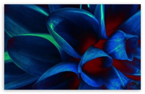 Blue Flower Petals, Macro ❤ 4K UHD Wallpaper for Wide 16:10 5:3 Widescreen WHXGA WQXGA WUXGA WXGA WGA ; 4K UHD 16:9 Ultra High Definition 2160p 1440p 1080p 900p 720p ; Standard 4:3 5:4 3:2 Fullscreen UXGA XGA SVGA QSXGA SXGA DVGA HVGA HQVGA ( Apple PowerBook G4 iPhone 4 3G 3GS iPod Touch ) ; Tablet 1:1 ; iPad 1/2/Mini ; Mobile 4:3 5:3 3:2 16:9 5:4 - UXGA XGA SVGA WGA DVGA HVGA HQVGA ( Apple PowerBook G4 iPhone 4 3G 3GS iPod Touch ) 2160p 1440p 1080p 900p 720p QSXGA SXGA ;