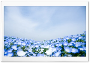 Blue Flowers Ultra HD Wallpaper for 4K UHD Widescreen desktop, tablet & smartphone