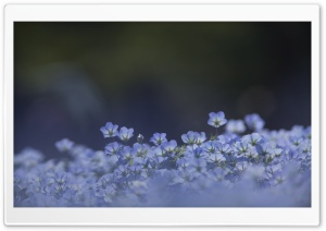 Blue Flowers Background HD Wide Wallpaper for Widescreen