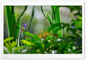 Blue Flowers Blooming HD Wide Wallpaper for Widescreen