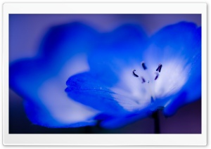 Blue Flowers Macro HD Wide Wallpaper for Widescreen