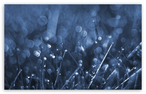Blue Grass Bokeh ❤ 4K UHD Wallpaper for Wide 16:10 5:3 Widescreen WHXGA WQXGA WUXGA WXGA WGA ; 4K UHD 16:9 Ultra High Definition 2160p 1440p 1080p 900p 720p ; Standard 4:3 5:4 3:2 Fullscreen UXGA XGA SVGA QSXGA SXGA DVGA HVGA HQVGA ( Apple PowerBook G4 iPhone 4 3G 3GS iPod Touch ) ; Smartphone 5:3 WGA ; Tablet 1:1 ; iPad 1/2/Mini ; Mobile 4:3 5:3 3:2 16:9 5:4 - UXGA XGA SVGA WGA DVGA HVGA HQVGA ( Apple PowerBook G4 iPhone 4 3G 3GS iPod Touch ) 2160p 1440p 1080p 900p 720p QSXGA SXGA ; Dual 16:10 5:3 4:3 5:4 WHXGA WQXGA WUXGA WXGA WGA UXGA XGA SVGA QSXGA SXGA ;