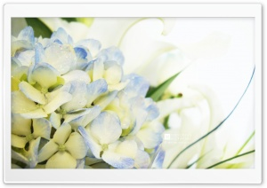 Blue Hydrangea and Lilies HD Wide Wallpaper for Widescreen