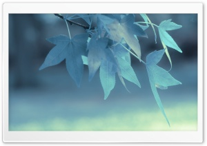 Blue Leaves HD Wide Wallpaper for Widescreen