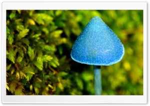 Blue Mushroom HD Wide Wallpaper for 4K UHD Widescreen desktop & smartphone