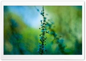 Blue Plant HD Wide Wallpaper for Widescreen