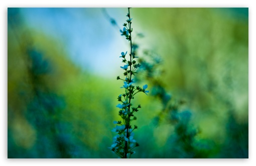 Blue Plant ❤ 4K UHD Wallpaper for Wide 16:10 5:3 Widescreen WHXGA WQXGA WUXGA WXGA WGA ; 4K UHD 16:9 Ultra High Definition 2160p 1440p 1080p 900p 720p ; UHD 16:9 2160p 1440p 1080p 900p 720p ; Standard 4:3 5:4 3:2 Fullscreen UXGA XGA SVGA QSXGA SXGA DVGA HVGA HQVGA ( Apple PowerBook G4 iPhone 4 3G 3GS iPod Touch ) ; Tablet 1:1 ; iPad 1/2/Mini ; Mobile 4:3 5:3 3:2 16:9 5:4 - UXGA XGA SVGA WGA DVGA HVGA HQVGA ( Apple PowerBook G4 iPhone 4 3G 3GS iPod Touch ) 2160p 1440p 1080p 900p 720p QSXGA SXGA ; Dual 16:10 5:3 16:9 4:3 5:4 WHXGA WQXGA WUXGA WXGA WGA 2160p 1440p 1080p 900p 720p UXGA XGA SVGA QSXGA SXGA ;