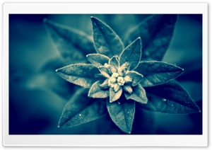 Blue Plant Macro HD Wide Wallpaper for Widescreen