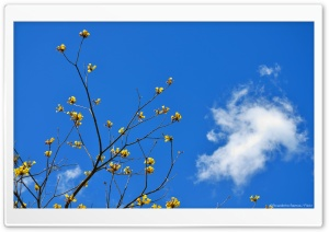 Blue Sky and Yellow Flowers HD Wide Wallpaper for Widescreen