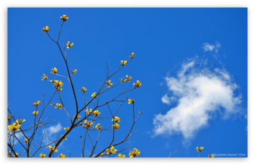 Blue Sky and Yellow Flowers ❤ 4K UHD Wallpaper for Wide 16:10 5:3 Widescreen WHXGA WQXGA WUXGA WXGA WGA ; 4K UHD 16:9 Ultra High Definition 2160p 1440p 1080p 900p 720p ; Standard 3:2 Fullscreen DVGA HVGA HQVGA ( Apple PowerBook G4 iPhone 4 3G 3GS iPod Touch ) ; Tablet 1:1 ; iPad 1/2/Mini ; Mobile 4:3 5:3 3:2 16:9 - UXGA XGA SVGA WGA DVGA HVGA HQVGA ( Apple PowerBook G4 iPhone 4 3G 3GS iPod Touch ) 2160p 1440p 1080p 900p 720p ;