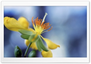 Blue Sky Bokeh, Yellow Flower HD Wide Wallpaper for Widescreen