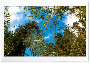 Blue Sky in Autumn HD Wide Wallpaper for Widescreen