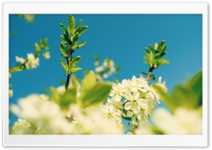 Blue Sky, Spring HD Wide Wallpaper for Widescreen