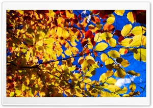 Blue Sky, Yellow Leaves, Tree Branches, Autumn HD Wide Wallpaper for 4K UHD Widescreen desktop & smartphone