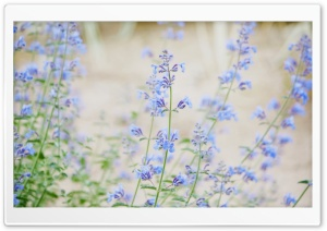 Blue Small Flowers HD Wide Wallpaper for Widescreen