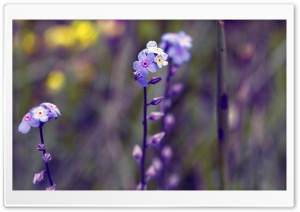 Blue Small Flowers, Bokeh HD Wide Wallpaper for Widescreen