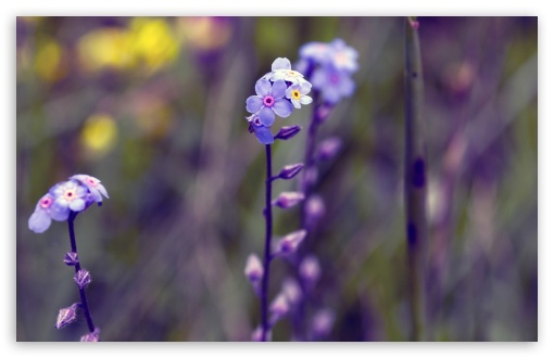 Blue Small Flowers, Bokeh ❤ 4K UHD Wallpaper for Wide 16:10 5:3 Widescreen WHXGA WQXGA WUXGA WXGA WGA ; 4K UHD 16:9 Ultra High Definition 2160p 1440p 1080p 900p 720p ; UHD 16:9 2160p 1440p 1080p 900p 720p ; Standard 4:3 5:4 3:2 Fullscreen UXGA XGA SVGA QSXGA SXGA DVGA HVGA HQVGA ( Apple PowerBook G4 iPhone 4 3G 3GS iPod Touch ) ; Tablet 1:1 ; iPad 1/2/Mini ; Mobile 4:3 5:3 3:2 16:9 5:4 - UXGA XGA SVGA WGA DVGA HVGA HQVGA ( Apple PowerBook G4 iPhone 4 3G 3GS iPod Touch ) 2160p 1440p 1080p 900p 720p QSXGA SXGA ;