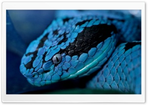Blue Snake HD Wide Wallpaper for Widescreen