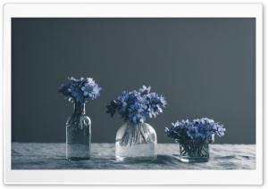 Blue Spring Flowers Still Life Ultra HD Wallpaper for 4K UHD Widescreen desktop, tablet & smartphone
