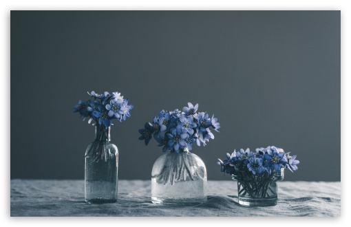 Blue Spring Flowers Still Life UltraHD Wallpaper for Wide 16:10 5:3 Widescreen WHXGA WQXGA WUXGA WXGA WGA ; UltraWide 21:9 24:10 ; 8K UHD TV 16:9 Ultra High Definition 2160p 1440p 1080p 900p 720p ; UHD 16:9 2160p 1440p 1080p 900p 720p ; Standard 4:3 5:4 3:2 Fullscreen UXGA XGA SVGA QSXGA SXGA DVGA HVGA HQVGA ( Apple PowerBook G4 iPhone 4 3G 3GS iPod Touch ) ; Tablet 1:1 ; iPad 1/2/Mini ; Mobile 4:3 5:3 3:2 16:9 5:4 - UXGA XGA SVGA WGA DVGA HVGA HQVGA ( Apple PowerBook G4 iPhone 4 3G 3GS iPod Touch ) 2160p 1440p 1080p 900p 720p QSXGA SXGA ; Dual 4:3 5:4 UXGA XGA SVGA QSXGA SXGA ;