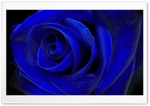 Blue Velvet HD Wide Wallpaper for Widescreen