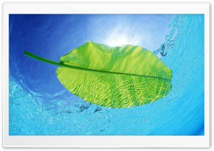Blue Waters Of A Green Leaf HD Wide Wallpaper for Widescreen