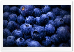 Blueberries HD Wide Wallpaper for 4K UHD Widescreen desktop & smartphone