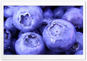 Blueberry HD Wide Wallpaper for Widescreen