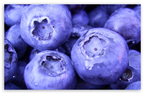 Blueberry HD wallpaper for Wide 16:10 5:3 Widescreen WHXGA WQXGA WUXGA WXGA WGA ; HD 16:9 High Definition WQHD QWXGA 1080p 900p 720p QHD nHD ; Standard 4:3 5:4 3:2 Fullscreen UXGA XGA SVGA QSXGA SXGA DVGA HVGA HQVGA devices ( Apple PowerBook G4 iPhone 4 3G 3GS iPod Touch ) ; Tablet 1:1 ; iPad 1/2/Mini ; Mobile 4:3 5:3 3:2 5:4 - UXGA XGA SVGA WGA DVGA HVGA HQVGA devices ( Apple PowerBook G4 iPhone 4 3G 3GS iPod Touch ) QSXGA SXGA ;