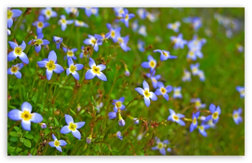 Bluets Close-up ❤ 4K UHD Wallpaper for Wide 16:10 5:3 Widescreen WHXGA WQXGA WUXGA WXGA WGA ; 4K UHD 16:9 Ultra High Definition 2160p 1440p 1080p 900p 720p ; UHD 16:9 2160p 1440p 1080p 900p 720p ; Standard 4:3 5:4 3:2 Fullscreen UXGA XGA SVGA QSXGA SXGA DVGA HVGA HQVGA ( Apple PowerBook G4 iPhone 4 3G 3GS iPod Touch ) ; Smartphone 5:3 WGA ; Tablet 1:1 ; iPad 1/2/Mini ; Mobile 4:3 5:3 3:2 16:9 5:4 - UXGA XGA SVGA WGA DVGA HVGA HQVGA ( Apple PowerBook G4 iPhone 4 3G 3GS iPod Touch ) 2160p 1440p 1080p 900p 720p QSXGA SXGA ; Dual 16:10 5:3 16:9 4:3 5:4 WHXGA WQXGA WUXGA WXGA WGA 2160p 1440p 1080p 900p 720p UXGA XGA SVGA QSXGA SXGA ;